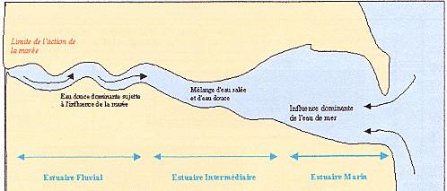 Schema-Estuaire